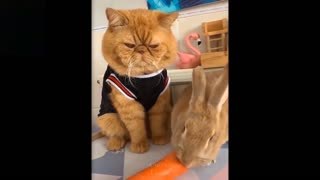 You won't believe what this cat did!