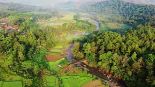 Best Rice fields Free Video | Nature | Solemn Music Background