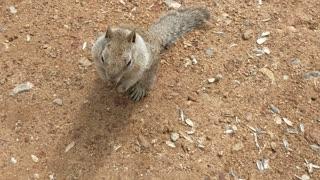 Squirrel friendly