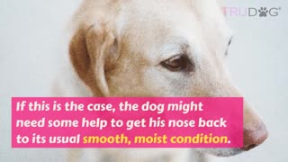 How much you know about your dog>?