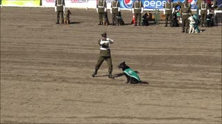 Police dogs show in Chile