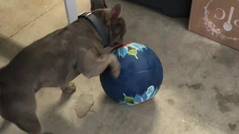 Bruno Plays Basketball
