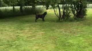 Mia the Dog Chomps at Bouncing Balloon