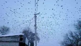 Ravens Invasion