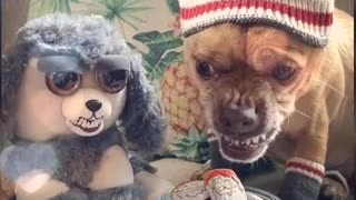 Funny fun camera doll with a dog.