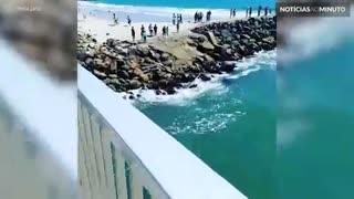 Filhote de baleia surge em lagoa na Califórnia