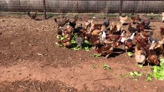 Sunfinch Farm Update After Winter Storm