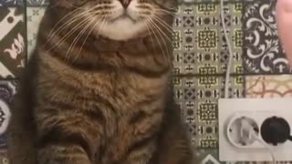 Strange funny cat