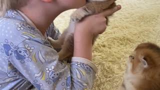 Kid Really Loves His Kittens
