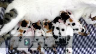 Mother cat feeding her kittens: