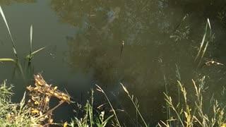Fish swim near the fishing rod