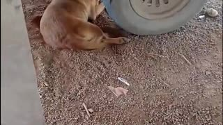 Human and Dog Scare Each Other