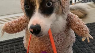 Dressed up Dog Gets Halloween Treat
