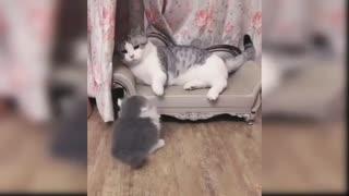 Mommy Cat doesn't like her Baby Kitten😿😿😿😿😂😂😂😂😂