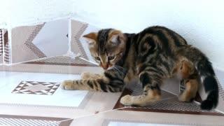 Beautiful Funny cat play