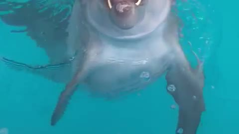 Dolphin is a beautiful animal