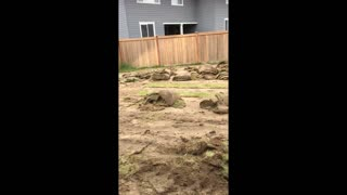 Dad Builds His Own Baseball Field in Backyard
