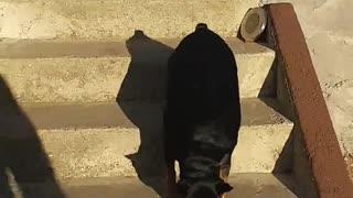 How to train dog
