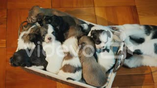 Dog puppies in the box