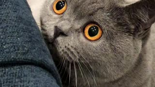 Excitable kitten shows off his crazy insane eyes