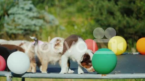 Cute dog puppies$