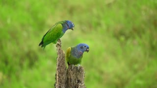 A couple of parrot birds in nature