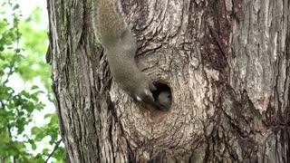 Baby Squirrels Frolicking