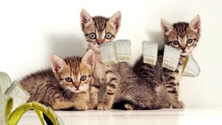 Trois chats et une banane!!!