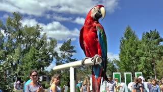 Parrot very beautiful in Sweden very nice