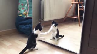 Funny cat and mirror..Watch the latest video