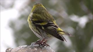 Beautiful Bird 01