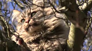 Cool cat video
