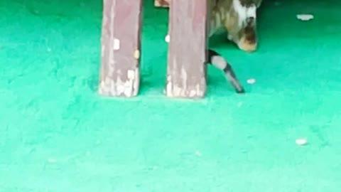 cat catching lizard