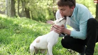 Why your dog behave Strange_21 Dog Behaviors _ Jaw-Dropping Facts about Dogs.