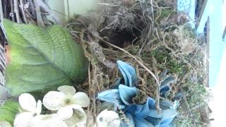 Baby birds born in wreath on door