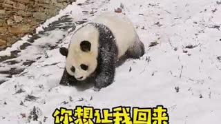 Rolling around the pandas.