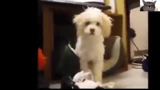 Funny Dogs Video Compilation 2 | Funny Videos
