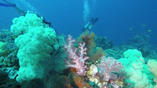 Top 5 diving spot Philippines 2021