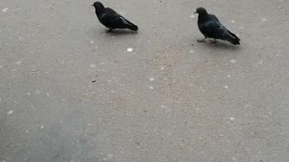 Pigeons in the city with people.