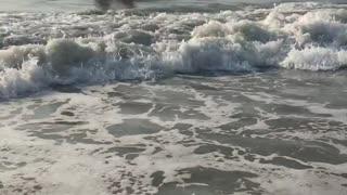 Sandy Beach Savannah Georgia atlanta