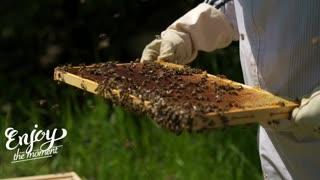 Bees and natural honey