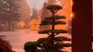 Lightning Hits Nearby Tree