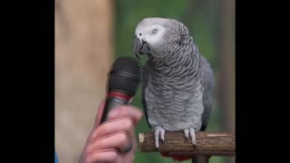 Talking parrot, English level primary school