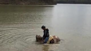 Horse decides to sit in lake during horseback riding session!!