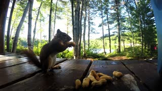Did you ever wonder where the squirrel hides his peanuts?