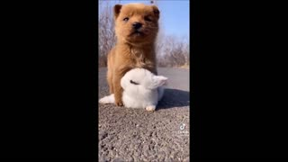 Dog & puppies