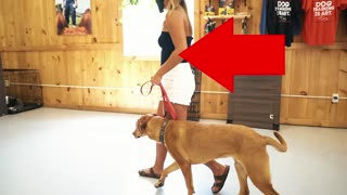 Biggest Mistakes Made In Dog Training