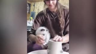 Cats Acting Crazy Around Owners - Funny Cats Compilation