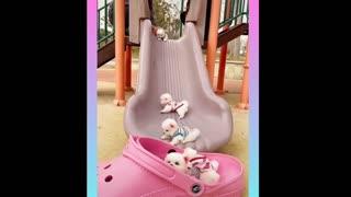 puppies on slide