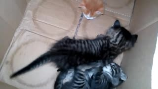 beautiful #cats